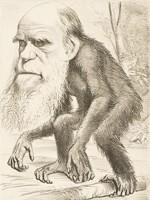 ダーウィンの進化論とは? わかりやすく解説!