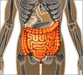 intestines01-min