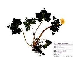 ダウンロード (54)-min